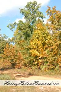 Fall colors at Hickory Hollow Homestead.