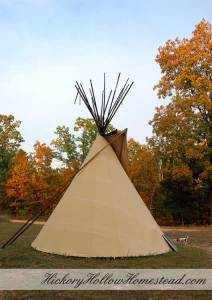 Autumn trees and tipi at Hickory Hollow Homestead.
